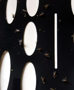 Armadilha 15 Fly Trap Glue Board with Flies