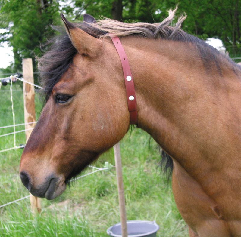 Fly Repellent Horse Collar on Horse